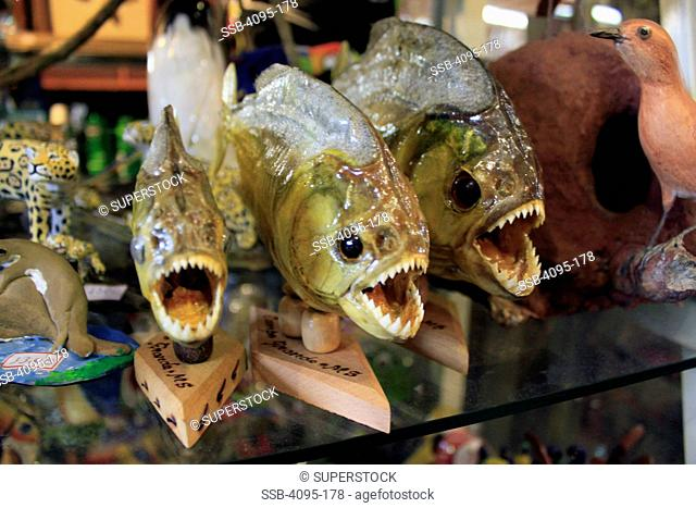 Mounted piranha fish Stock Photos and Images | age fotostock