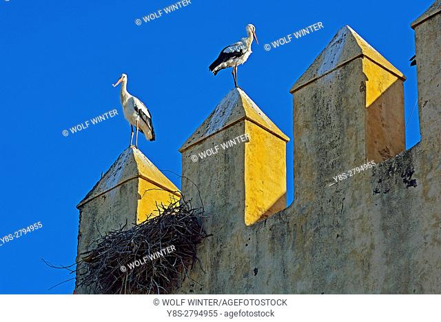 Stork(s) at the Battlements of the wall of the King's Palace, Fes, Middle Atlas, Morocco