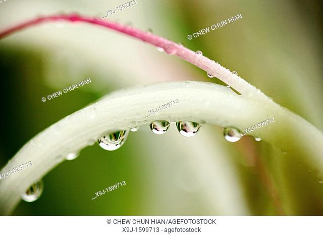 Dew drops on a plant