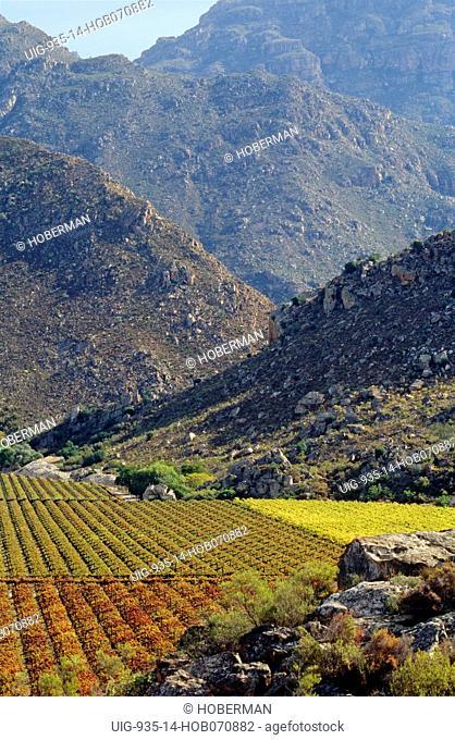 Cape Wine Route, Hex River Valley, Western Cape