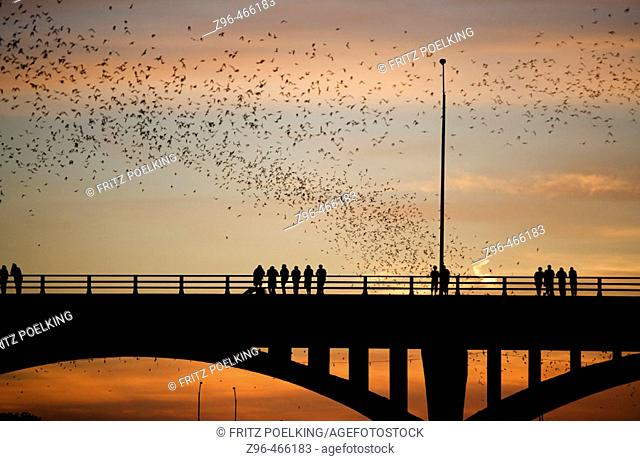 Mexican free-tailed bats (Tadarida brasiliensis). Sunset, World's largest urban bat colony. Congress Avenue Bridge. Austin, Texas. USA