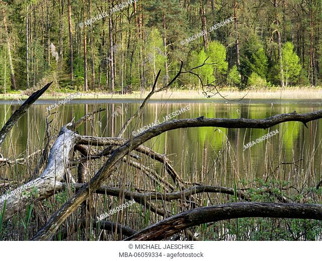 Palatine Woog, Palatinate Forest Nature Park