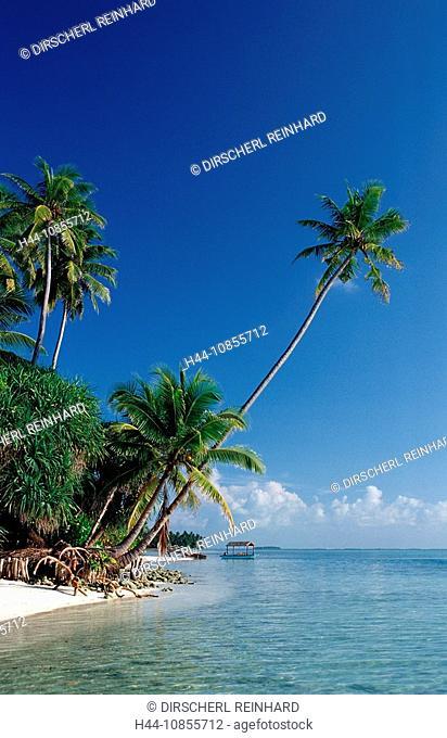 10855712, Maldives, Indian Ocean, Medhufushi, Meem