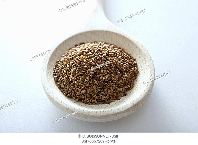 CULTIVATED LUCERNE Grains of cultivated lucerne (Medicago sativa) to sow the seeds