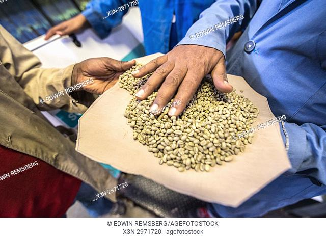 Addis Ababa, Ethiopia - Arabica coffee beans being graded by an optical coffee sorter at Oromia Coffee Farmers Cooperative