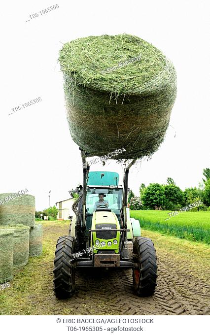 Farmer harvesting alfalfa or lucerne (Medicago sativa) for cattle food, Elsenheim, Alsace, France