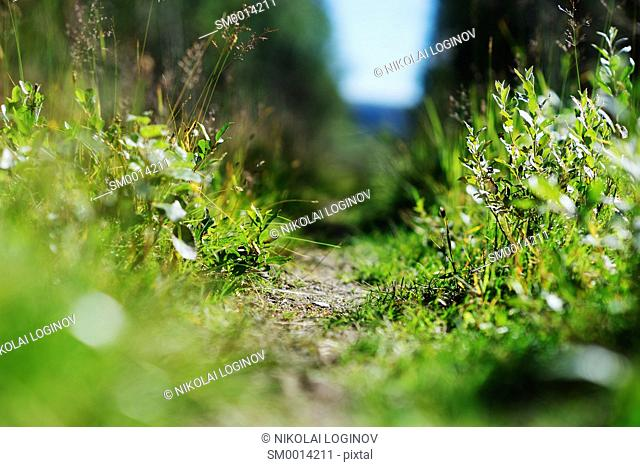 Summer Norway forest path backdrop hd