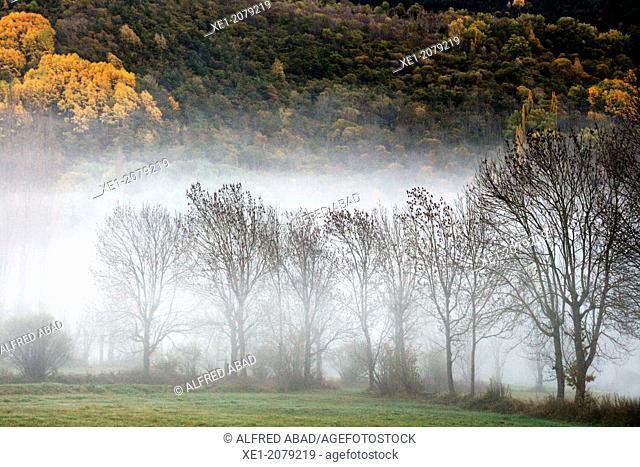 Fog, meadows, Barruera, Vall de Boi, Pyrenees, Catalonia, Spain