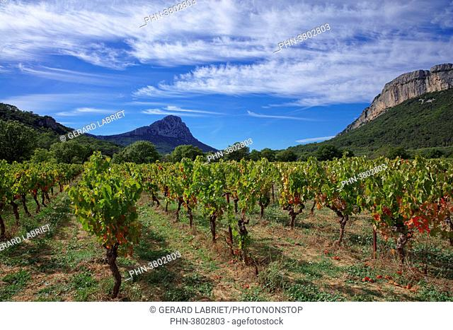 France, Herault, Pic-Saint-Loup, protected natural site, vineyard AOC hills of Languedoc