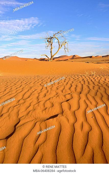 Namibia, Hardap, Namib desert, Namib-Naukluft national park, Sossusvlei dunes