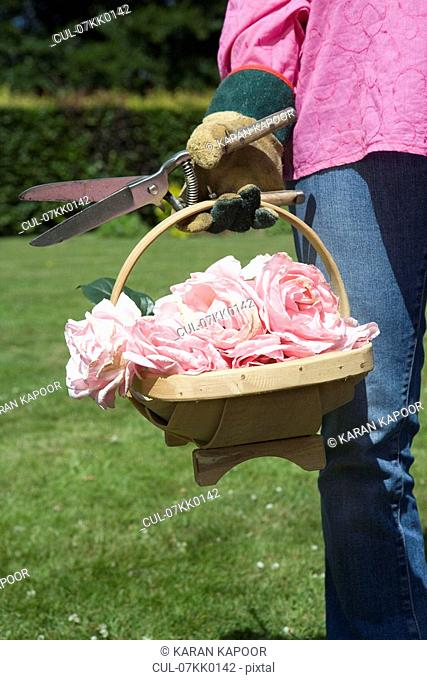 Close up of basket with cut roses