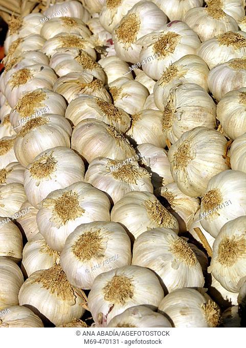 Garlic for sale. Fira Avícola Raça Prat, El Prat de Llobregat, Barcelona province, Catalonia, Spain