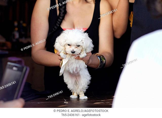 A girl holds a small white puppy, characterized Roman, Galician party in interest of Arde Lucus in the town of Lugo