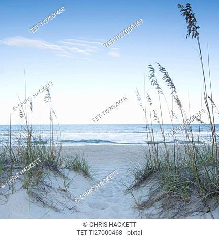 Marram grass in sandy beach