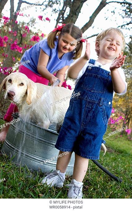 dog wash complete