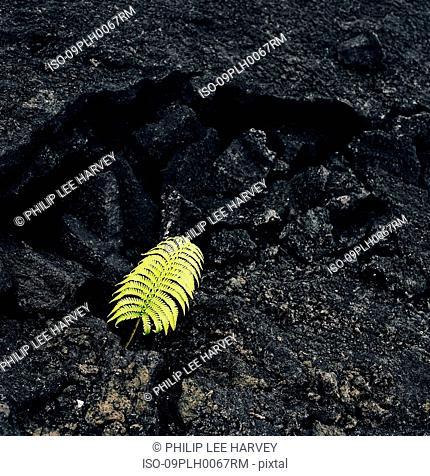 Single fern on rock formation