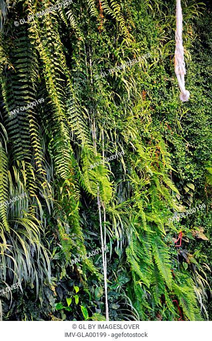 Green plants, green background outside