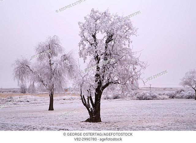 Frost trees, Minidoka National Historic Site, Idaho