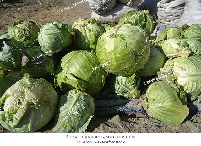 cabbage for sale at the market in Bayan-Ölgii in Western Mongolia