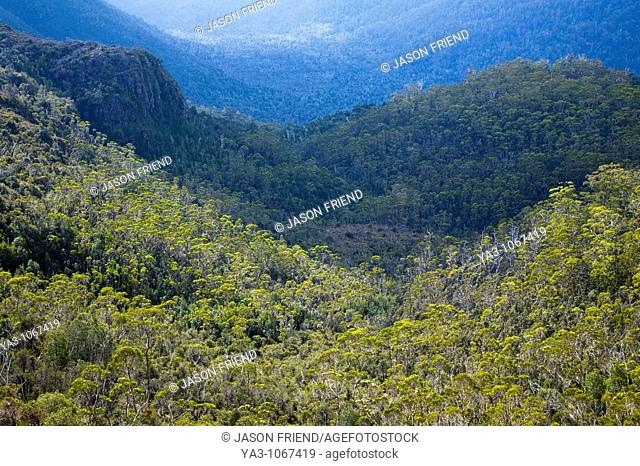 Australia, Tasmania, Cradle Mt - Lake St Clair National Park  Dense woodland in the Forth River Valley, viewed from a viewpoint on the Overland Track