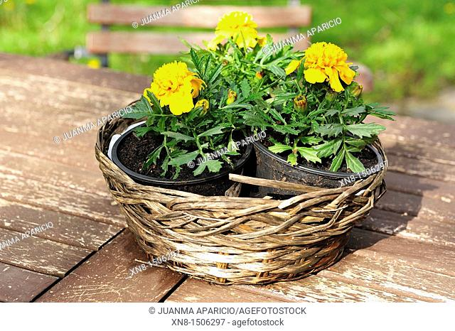 Wicker basket with flowers on a wooden table