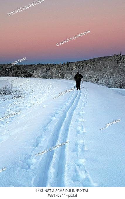 The tracks of a cross-country skier in the snow are leading into the distance at sunset on a cold winter day in rural Sweden