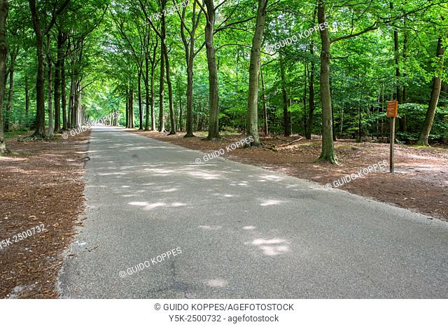 Mastbos, Breda, Netherlands. Concrete trackway inside a forest, filled with deciduous trees