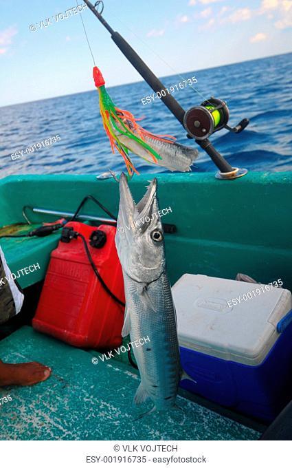 Baracuda hanging on fish-hook in fishing boat