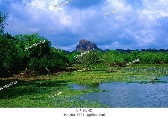 Lake, rainforest, mountain, Indian Lotus, Nelumba nucifera, Nelumbonaceae, flower, plant, clouds, Yala National Park, Sri Lanka