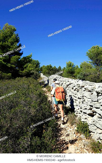 France, Vaucluse, Parc Naturel Regional du Luberon (Natural Regional Park of Luberon), Lagnes, hiking along the Wall of the Plague of the 18th century