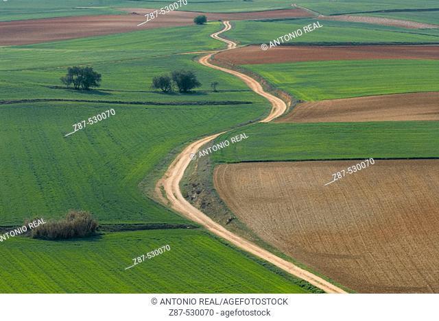 Fields in La Mancha. Tresjuncos. Cuenca. Ruta de Don Quijote. Castilla-La Mancha. Spain