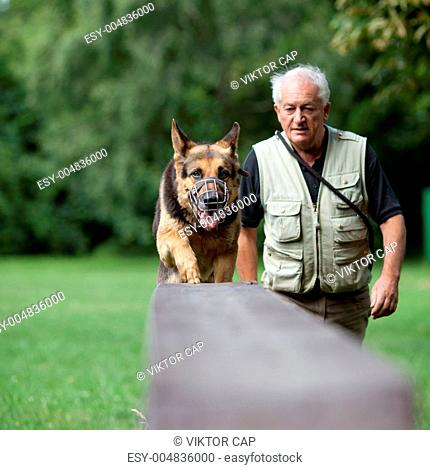 Master training his German Shepherd dog