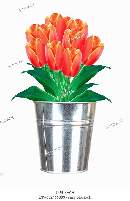 Bouquet of red tulips in small metal bucket isolated on white