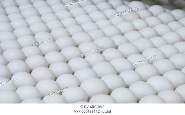 White eggs move along a factory conveyor belt