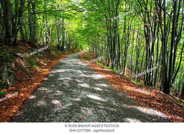 Park road through mixed forest, Plitvice Lakes National Park, Croatia