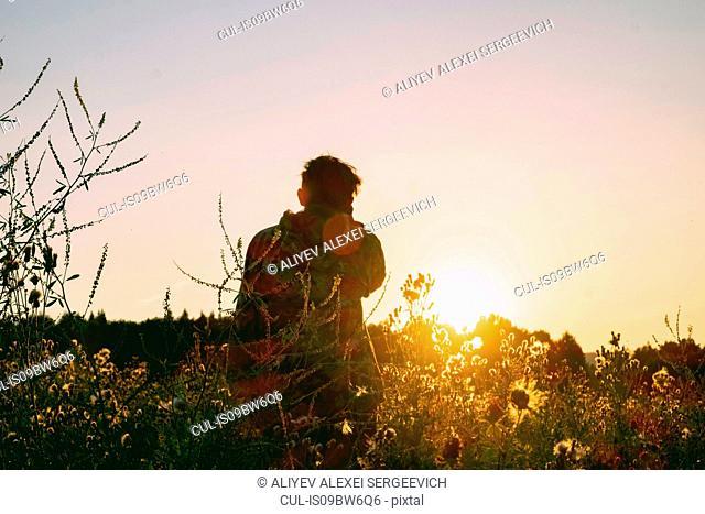 Man in wildflower field watching sunset, rear view