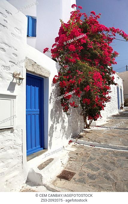 Blue house door with geranium flowers at side in the old town, Chora, Amorgos, Cyclades Islands, Greek Islands, Greece, Europe