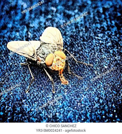 A fly licks on a trouser in Prado del Rey, Sierra de Grazalema, Spain