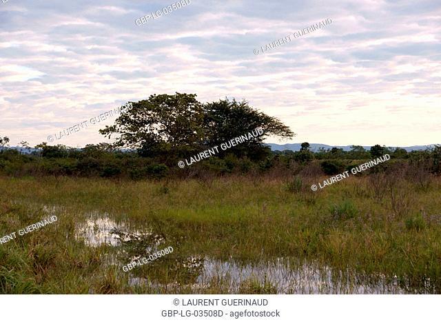 Landscape, Pantanal, Mato Grosso do Sul, Brazil