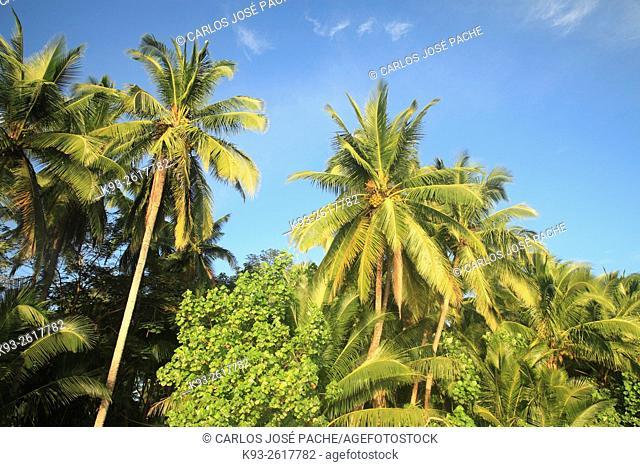 Reserva de fauna Curú, en la peninsula de Nicoya, Costa Rica