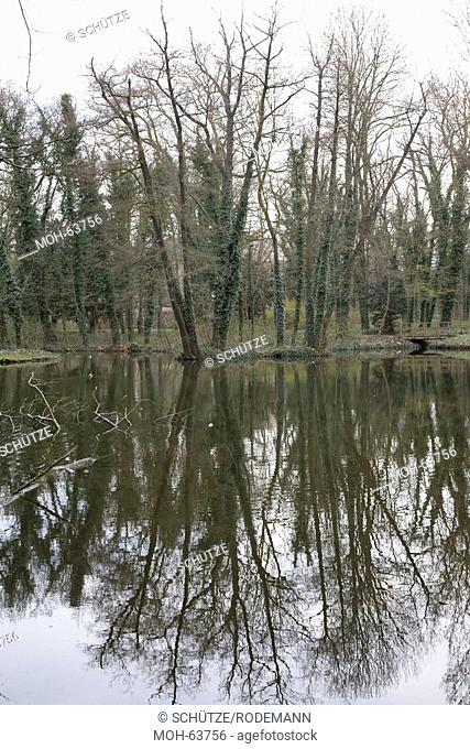 Landschaftspark, Auewald, Bäume mit Efeu