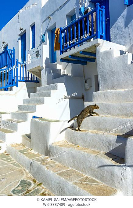 Cat in the street of Chora, Folegandros island, Cyclades, Greece
