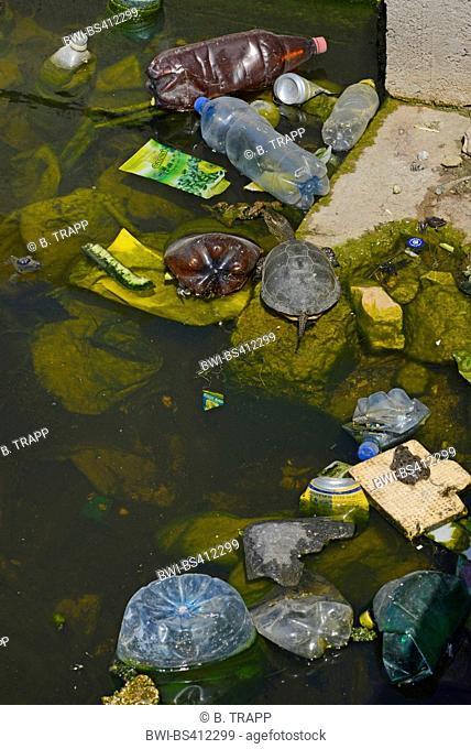 European pond terrapin, European pond turtle, European pond tortoise (Emys orbicularis), swimming between plastic waste, Romania, Dobrudscha