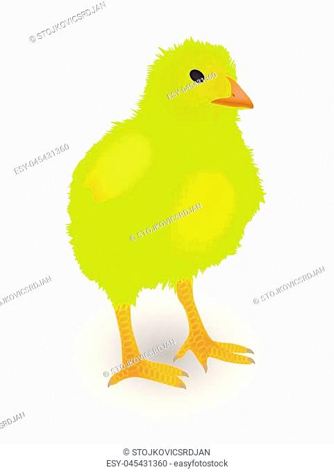 Small yellow chicken on white background, vector