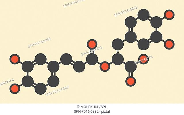 rosmarinic acid herbal antioxidant molecule. Present in a number of plants including rosemary (Rosmarinus officinalis). Stylized skeletal formula (chemical...