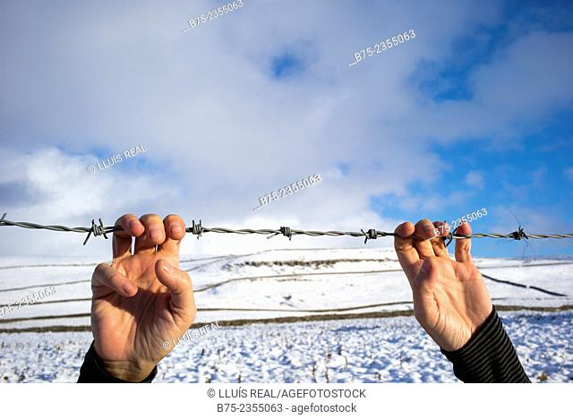 Closeup of hands clutching a barbed wire in a snowy landscape. Blue sky and clouds in the background. Yorkshire Dales, England, UK, Europe