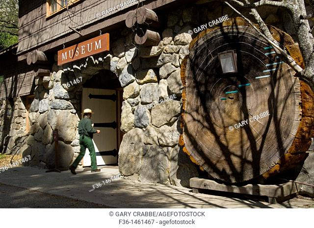 Giant sequoia tree showing age rings in front of the Yosemite Museum, Yosemite National Park, California