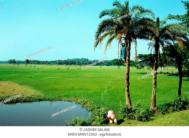 Agricultural fields in Anowara Chittagong, Bangladesh