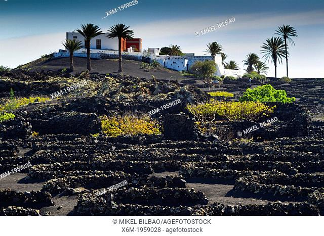 Vines growing in volcanic lapilli. La Geria region. Lanzarote, Canary Islands, Atlantic Ocean, Spain