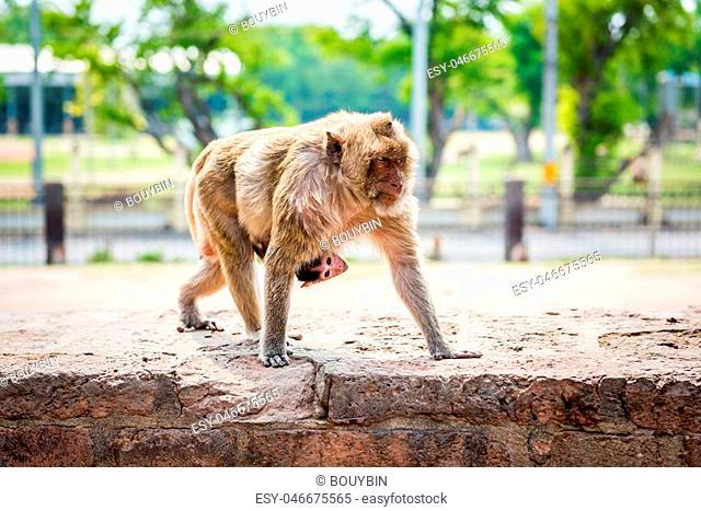 focus baby monkey)